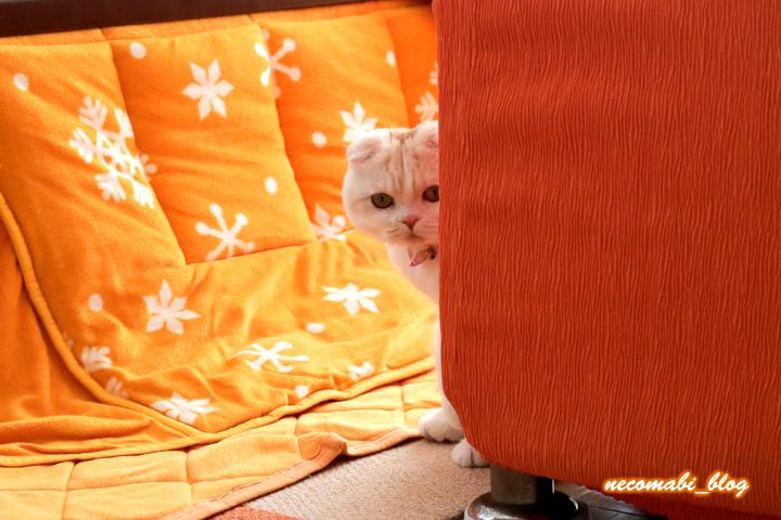 大好きなトンボのおもちゃと猫用トンネル♪