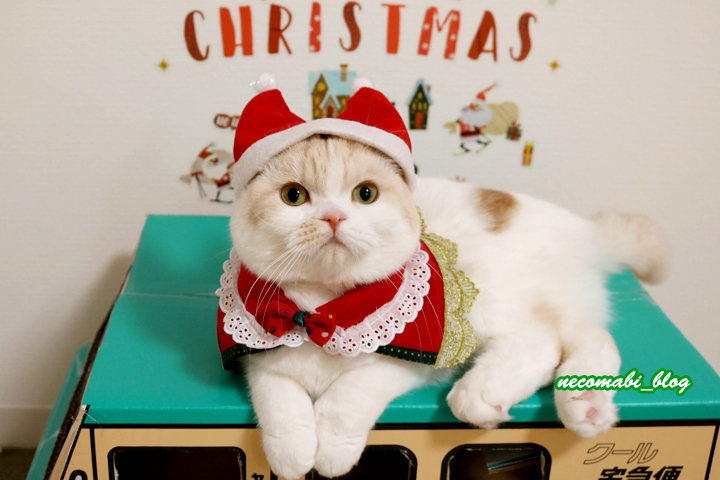 メリークリスマス♪♪
