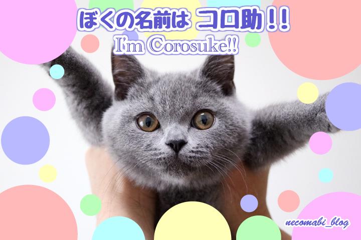 子猫迎え入れ!!新メンバー公開♪