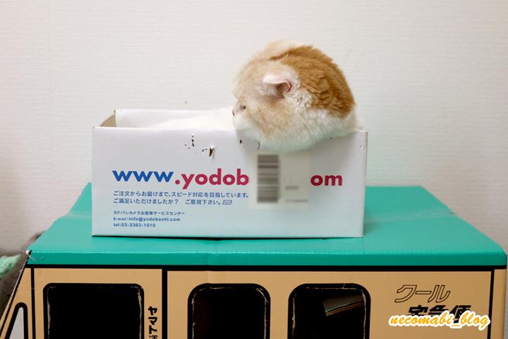 クロネコトラックと小さな段ボール箱!!