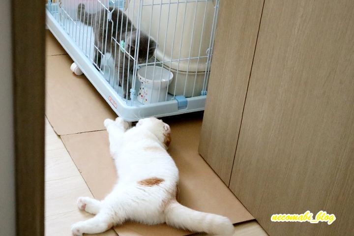 先住猫まびこ×新入りコロ助のその後の様子