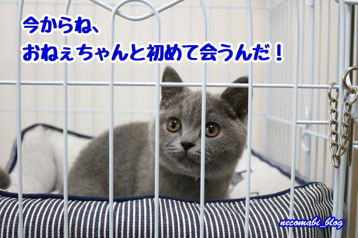 先住猫まびさん&新入りコロ助くんのファーストコンタクト!!