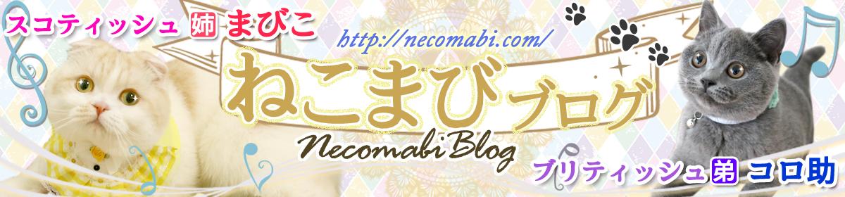 ねこまびブログ