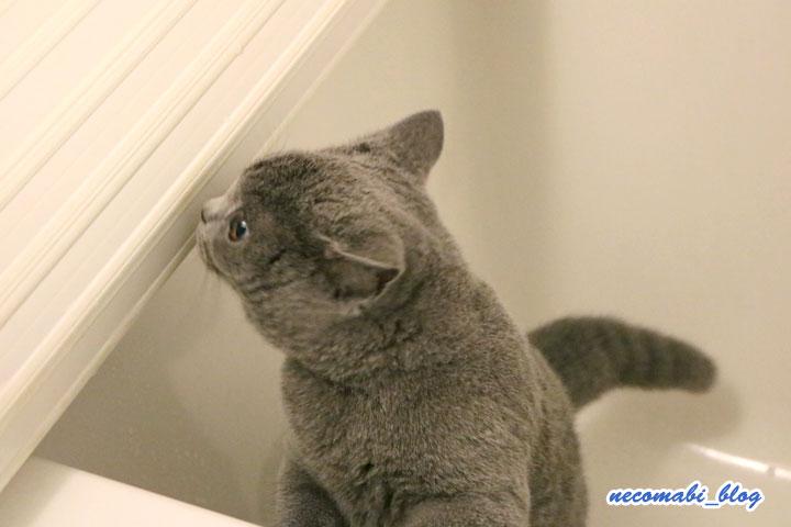 お風呂に入れました!!~コロ助くん初お風呂編~
