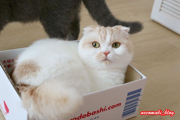 まびさんのお気に入り♪小さい箱に憧れるコロ助!!