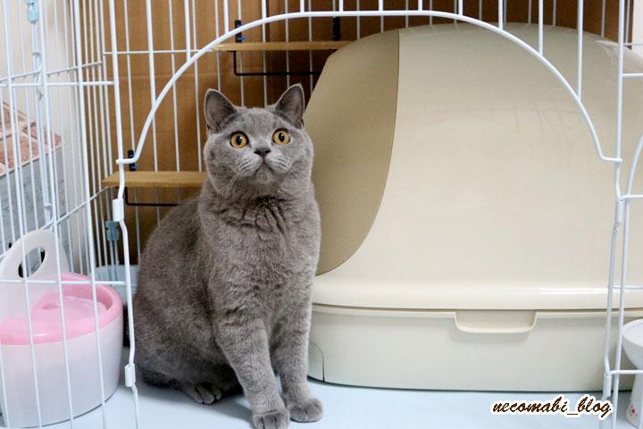猫のトイレのニオイにおススメの脱臭機