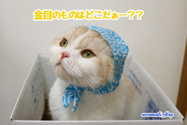 泥棒の気配~名探偵コロ助誕生か?!~