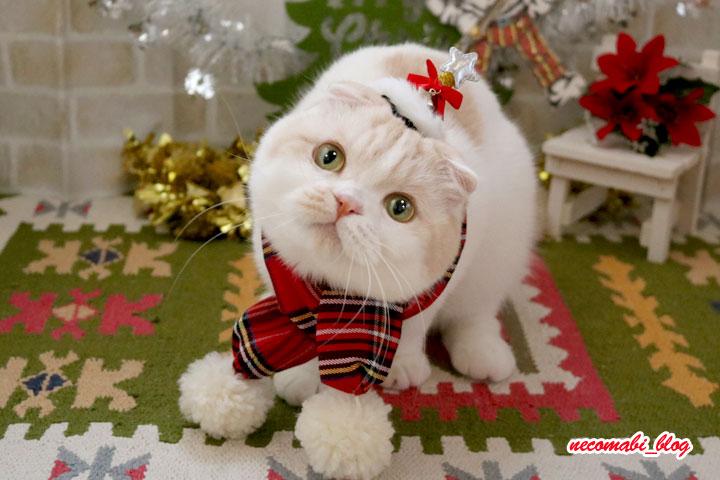 久々のガチャガチャ&クリスマス衣装で撮影会♪