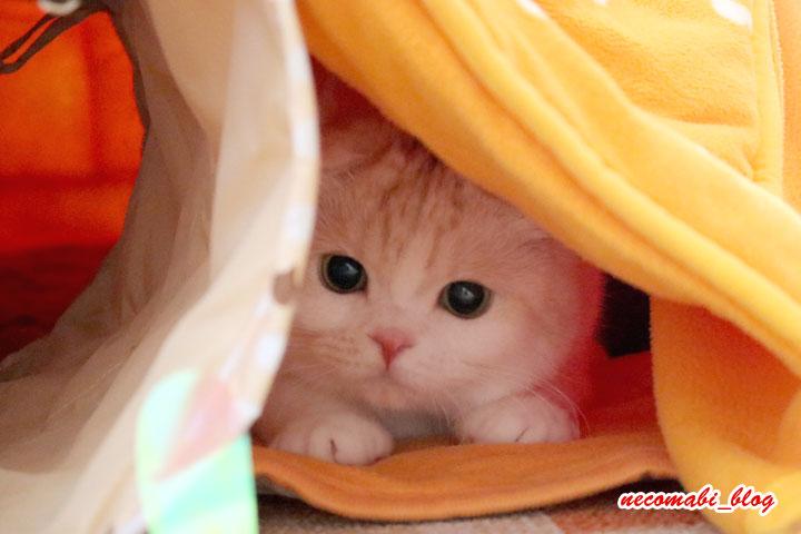こたつdeワイヤー猫じゃらし♪