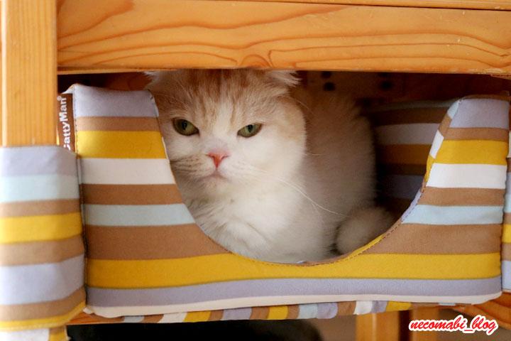 にゃんこの隠れ家ベッドを巡って!