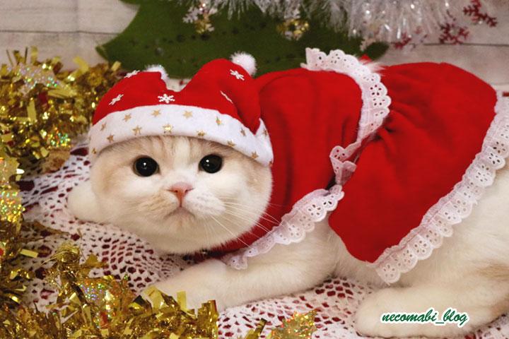 クリスマス衣装で登場♪