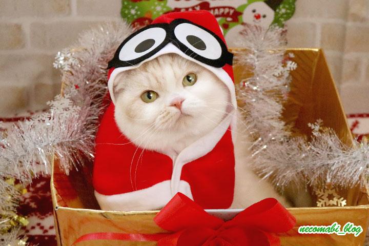 クリスマス版ミニオンズに大変身&天使が舞い降りた?!