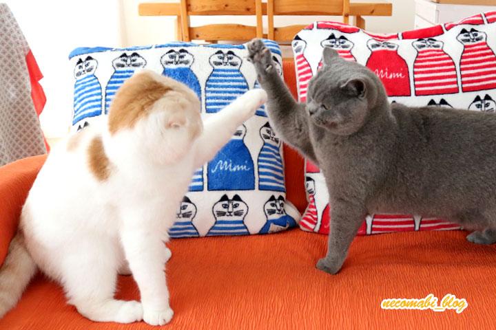 急に始まる姉弟喧嘩