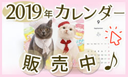ねこまびブログオリジナルカレンダー販売