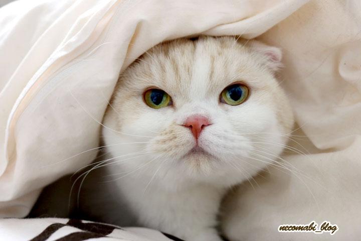 やっぱり大好き♪暖かいお布団