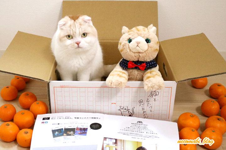 「猫と、こたつと、思い出みかん。」が届きました!!
