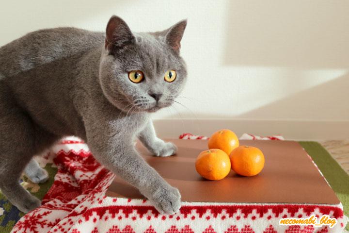 猫専用こたつ組み立て&興味津々なまびコロ♪