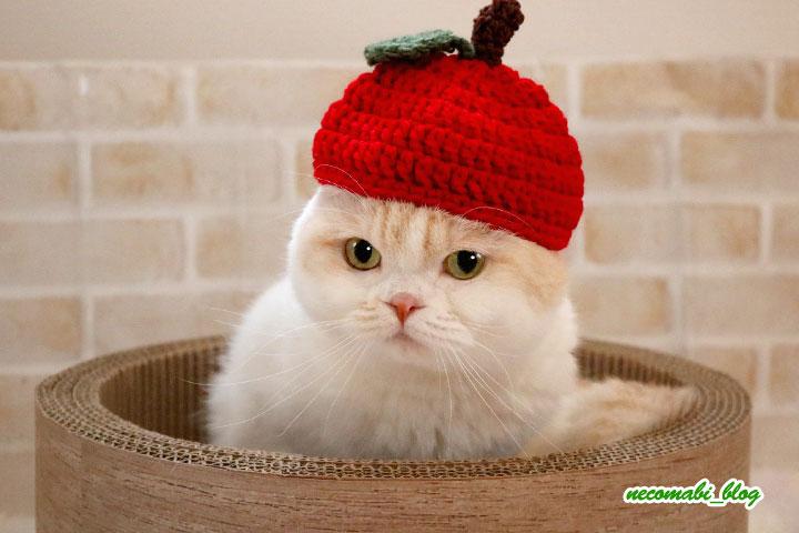 かわいいリンゴのニット帽♪