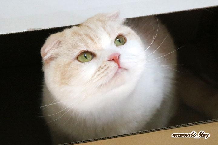 やっぱり可愛い!!箱猫まびさん♪