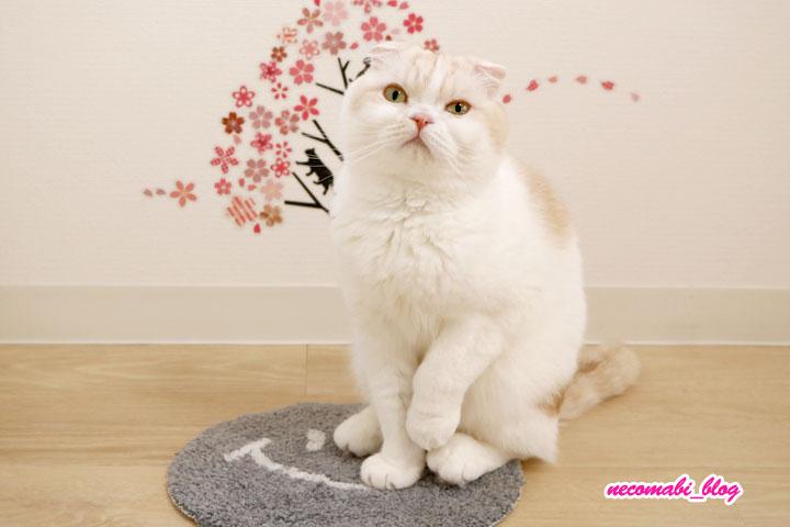 新たな猫ホイホイ?!小さい敷物