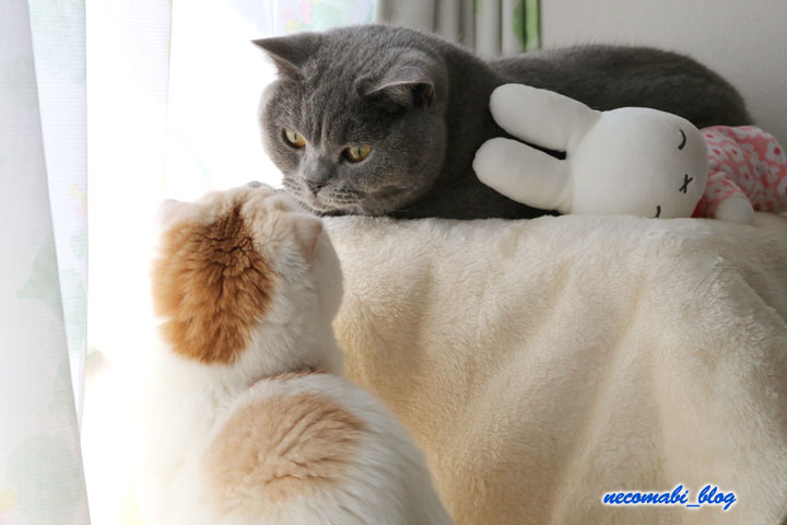 まびコロお気に入り♪作業部屋の窓際をめぐって!!