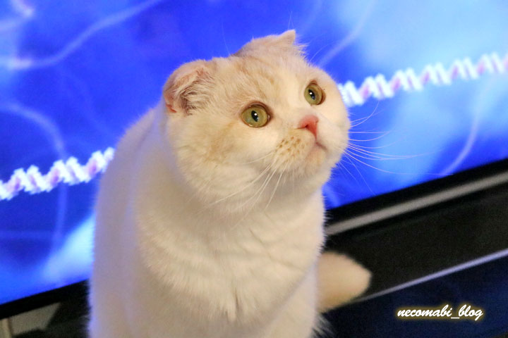 テレビの前で座り込むまびさん!!~映像効果で幻想的に♪~
