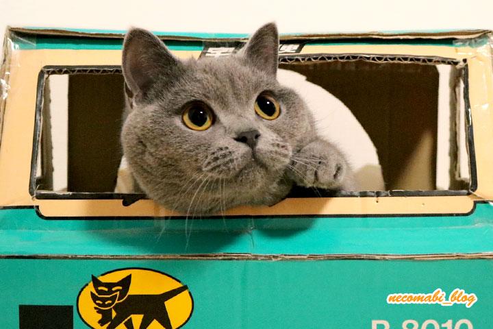 クロネコトラック改造!!&猫イベントねこにすと8告知