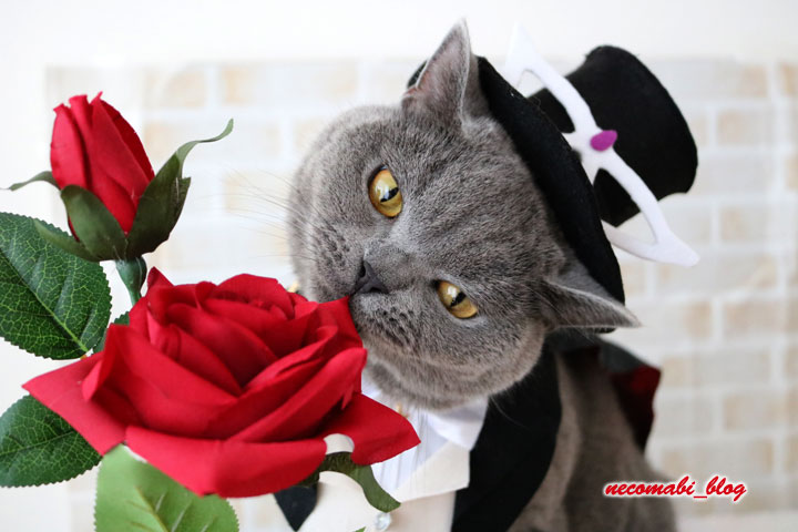 コスプレシリーズ!!~美少女戦士セーラームーンのタキシード仮面に大変身♪~
