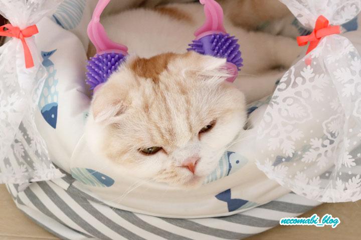 夏のダルさ解消?!猫用マッサージ機でリフレッシュ♪
