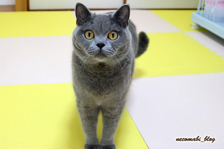 ネコ部屋の模様替え!!