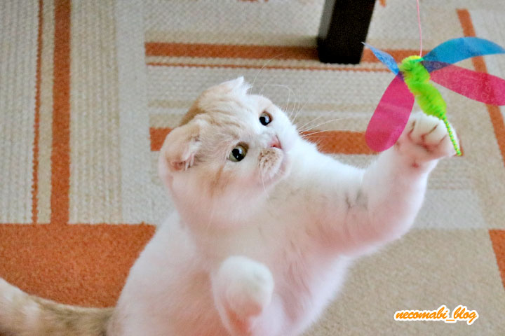 ダラけをシャキッと!猫じゃらしでハジけるまびコロ♪