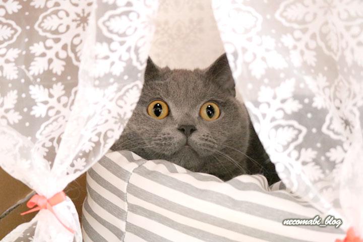 Nクールベッドに珍しく入るコロ助くん!!
