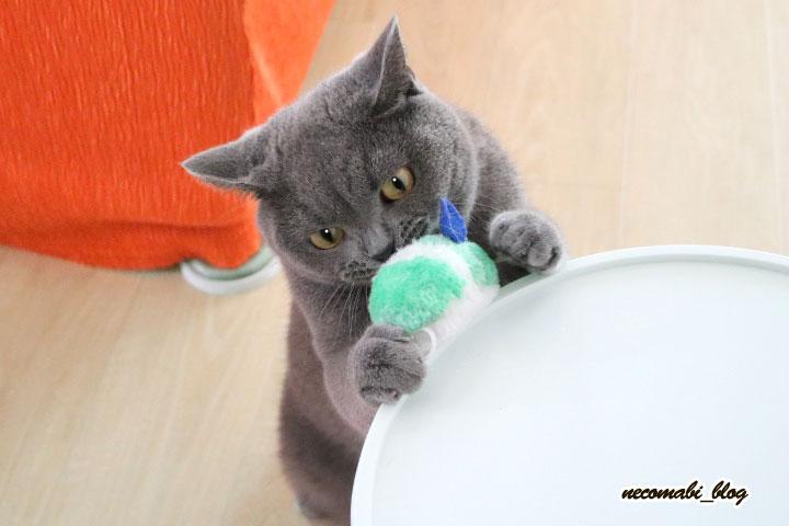 新しいネズミのおもちゃ♪反応は?!