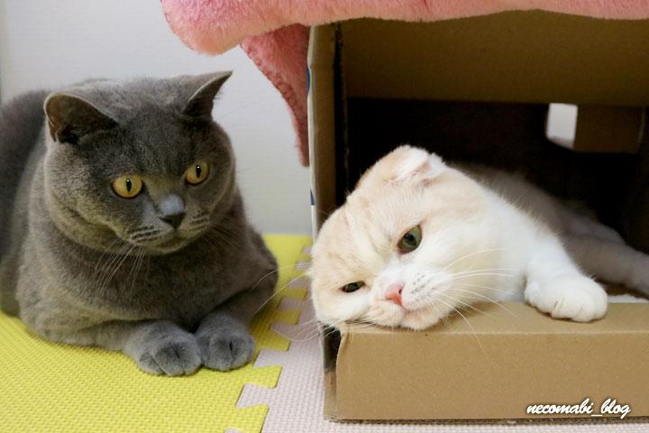 お気に入りのダンボール箱でツーショット!!