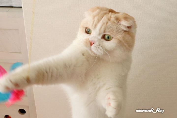 猫が食いつく動画への反応は如何に??