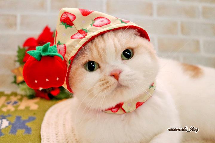 新しいおやつとイチゴ頭巾登場♪