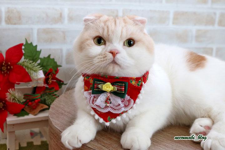 人気急上昇!!暖かお布団&気分はクリスマス♪