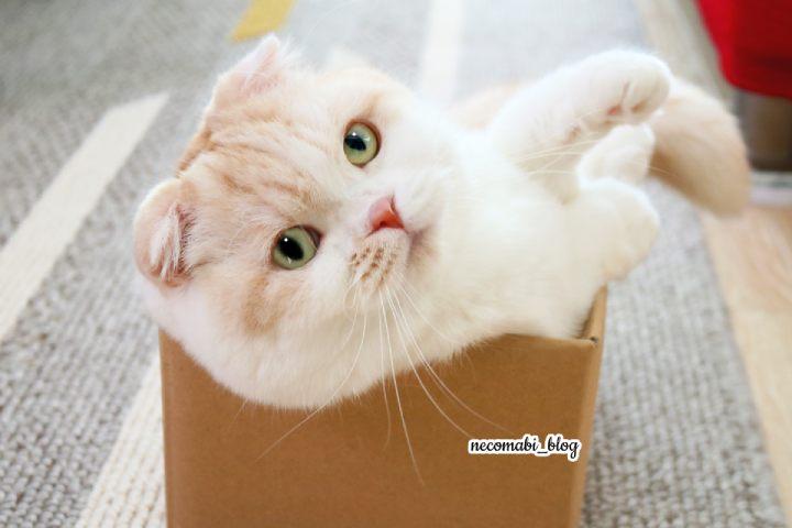 まびさん大興奮♪久々の小さいダンボール箱