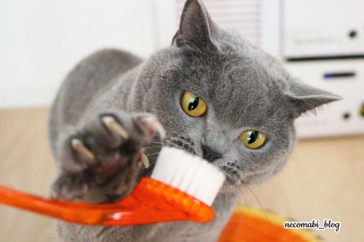 猫を虜にする洗顔ブラシvsコロ助くん!!