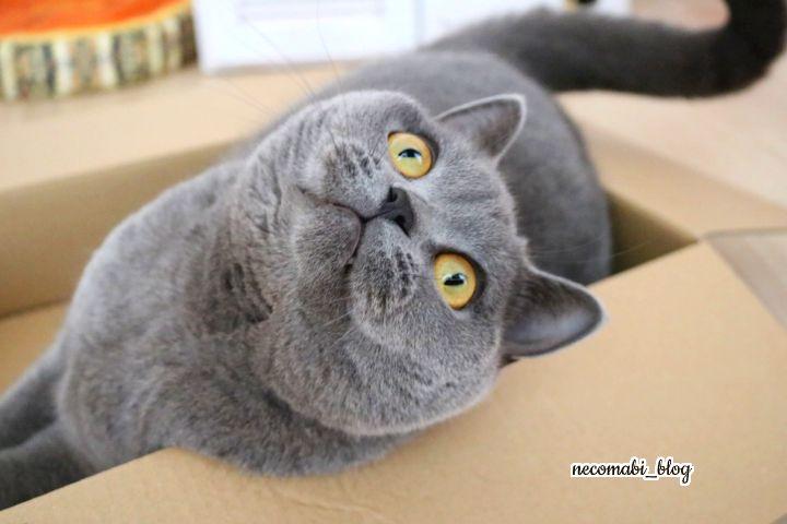 我が家の箱好きキャット達♪~先を越された、まびさん~