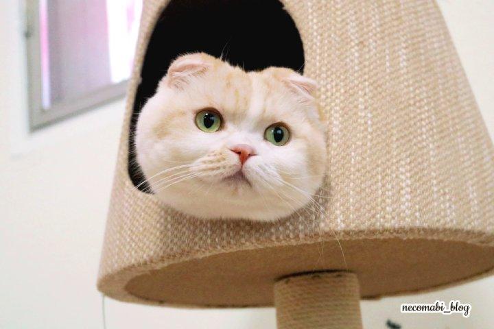 お気に入りの猫ランプタワーに入ったままで!!