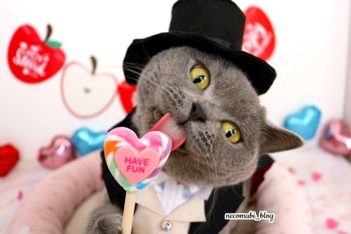ハッピーバレンタイン!!【動画付き】お上品に!?タキシード姿でロリポップをぺローン♪