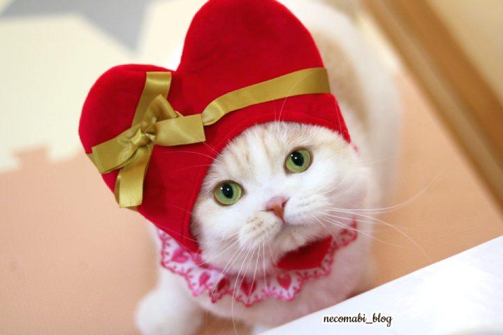 もうすぐバレンタイン♪大きなハートとモフモフくまさん!!
