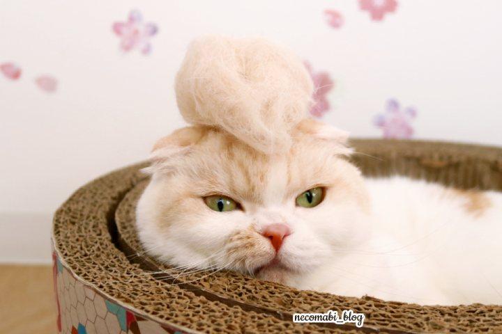 ごっそり大量。抜け毛でリーゼントヘアにイメチェンw