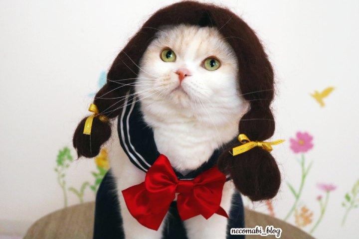 学生服でランラン♪ペット用セーラー服作り方公開!!
