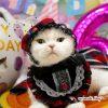 Happybirthday!!まびさん~今日は6回目のお誕生日♪~
